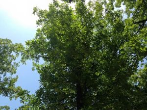 The view from my hammock.